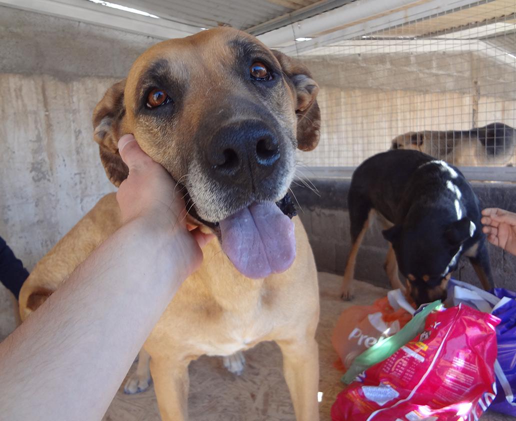 fundación anastasia para la protección canina